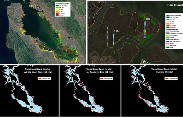 New mapping methodology and ranking system for estuarine-upland transition zones is now available for San Francisco Bay Thumbnail