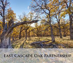 East Cascade Oak Partnership