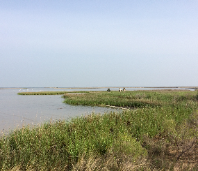Estuarine Tidal Marsh Landscape Endpoint Ecological Assessment [DRAFT]