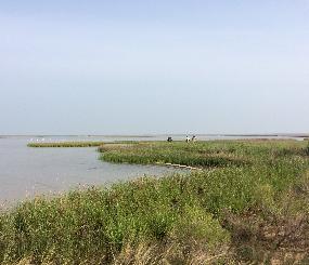 Estuarine Tidal Marsh Landscape Endpoint Ecological Assessment