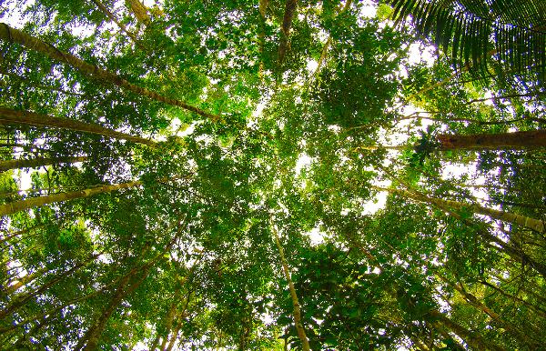 Amazonian Rainforest Thumbnail