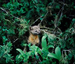 Sierra Nevada Carnivores