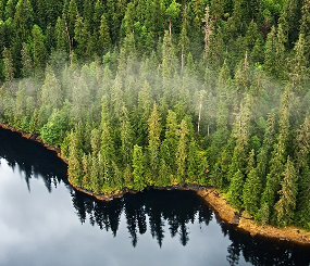 Transitioning to a Second Growth Timber Strategy in SE Alaska