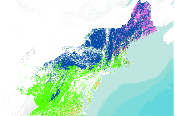 US Forest Service - Forest Type Groups (Northeast US) | Data Basin