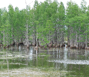 Forested Wetland Landscape Endpoint Ecological Assessment [DRAFT]
