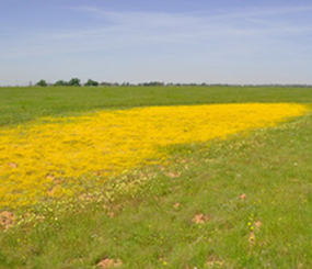 California Central Valley Landscape Conservation Project Gallery