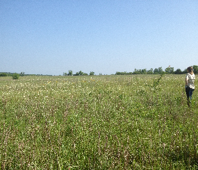 Grassland-Prairie-Savanna Landscape Endpoint Ecological Assessment [DRAFT]