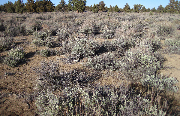 Delivering Usable Climate Change Information to Sagebrush Managers Thumbnail