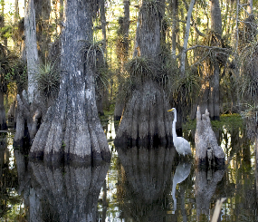 Freshwater Forested Wetlands PFLCC Priority Resource