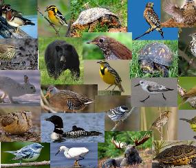 Northeast Wildlife Species