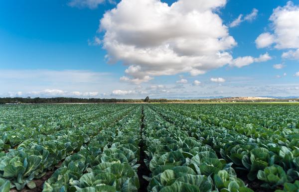 Agricultural and Ranch Lands of Santa Barbara County Thumbnail