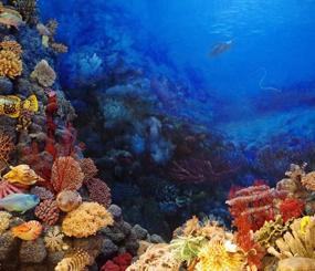 Marine Blueprint and Conservation Assets
