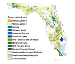Blueprint and Conservation Assets