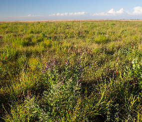 The Conservation Atlas for Midwest Grasslands