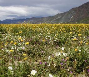 Grassland and Shrubland ecosystems