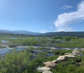 Sierra Meadow Prioritization Tool