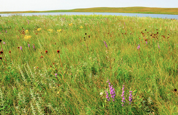 Building a Network of Grassland Landscapes in the Midwest: Change Strategies for the Future of Grassland Birds Thumbnail